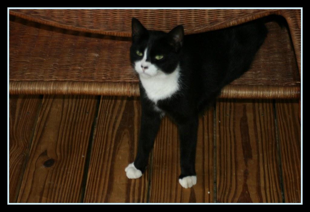 Two Legged Cat Meme