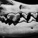 Fox Skull (part deux)