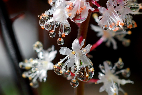 crop of drops | by Steve took it