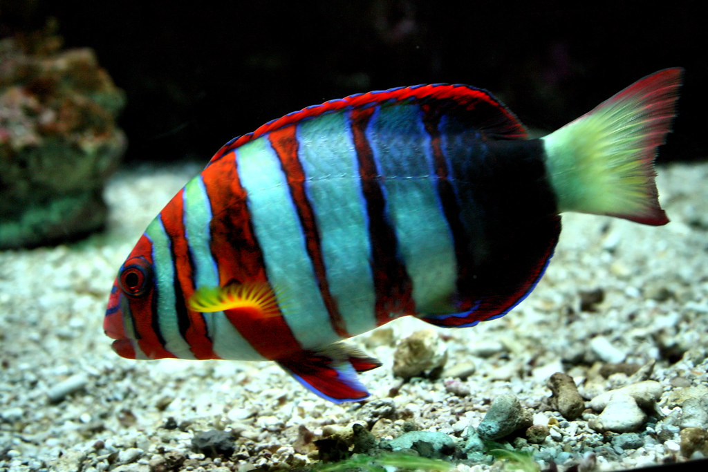 Tropical Colourful Fish Beth Ann Hay Flickr
