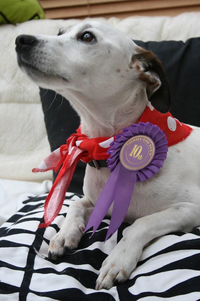 World Best Dog Breeds Guard Dog