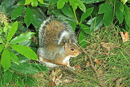 Image Result For Squirrel Gathering Nuts