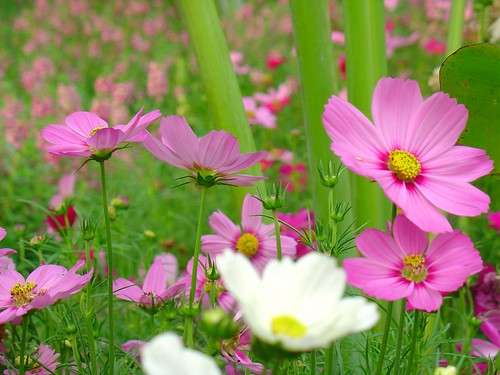 I love flower so much... | by Thai Jasmine (Smile..smile...Smile..)
