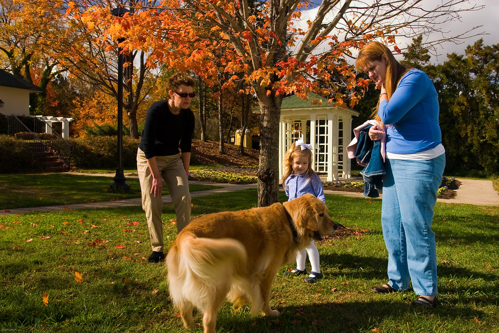 Dog Retriever Walking Clubs