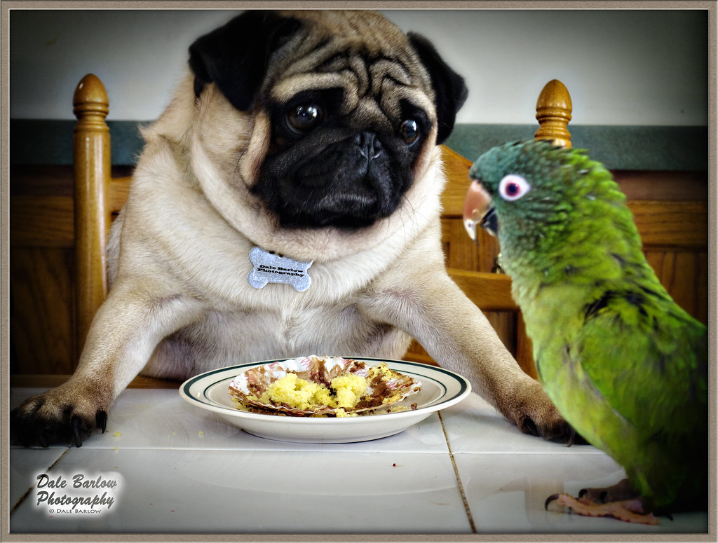 Happy Dog Food Company
