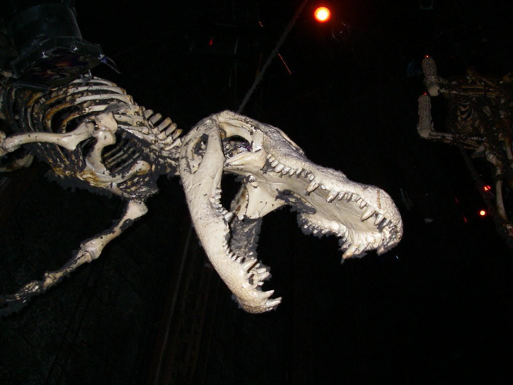 alligator skeleton related keywords   suggestions saber tooth tiger skull diagram saber tooth tiger skull diagram