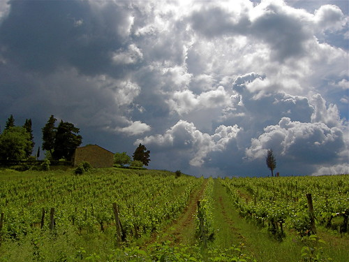 Storm and vineyard | by Bill Kirkpatrick