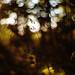 stillness in light
