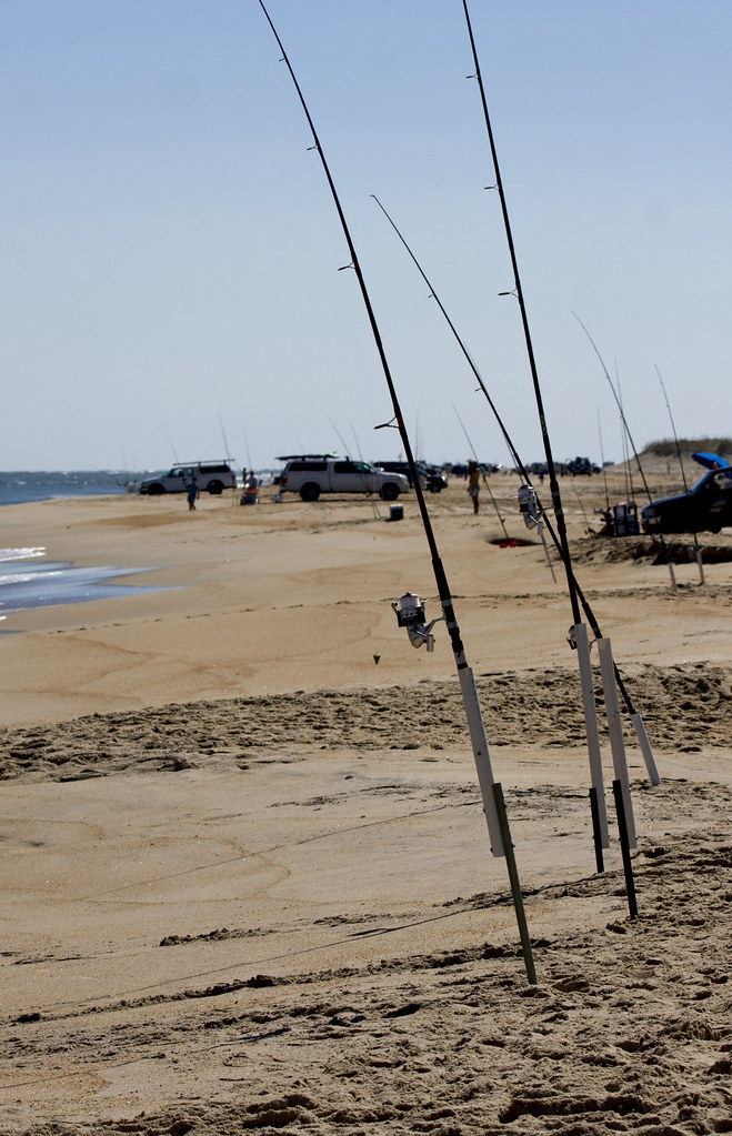 Cape hatteras surf fishing they drive down to the beach for Cape hatteras fishing report