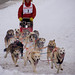 Sled Dogs #3