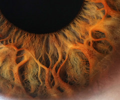 Eye Close Up | by Robert D Bruce