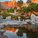 Baja California Palm Oasis