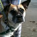 Sandy Doggie