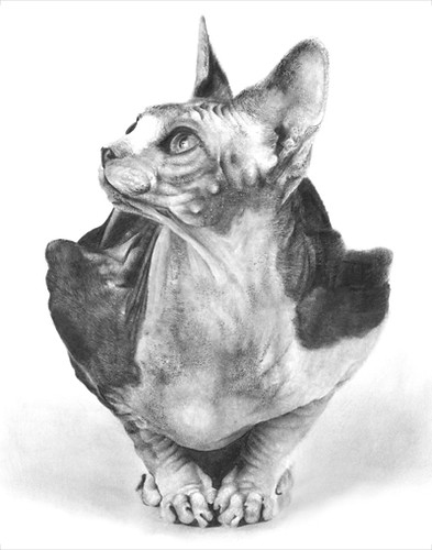 Sphynx Cat Pencil Drawing Size 11 Quot X14 Quot Medium Pencil