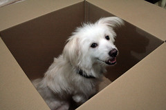 Dog in a Box | by pilferedrainbow