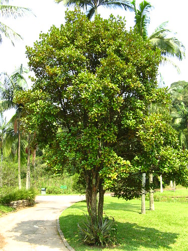 Plantation d'arbre fruitier  3290494435_a9f5613f92