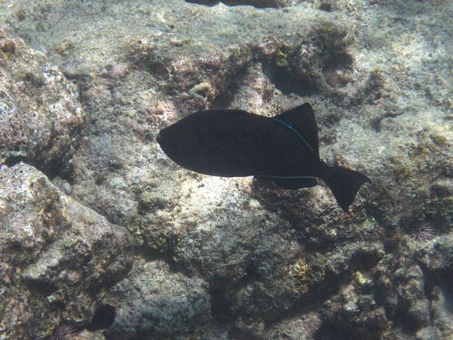 Cook Island Snorkeling Tours