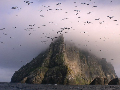 Gannets above Boreray, St Kilda | by seaharris