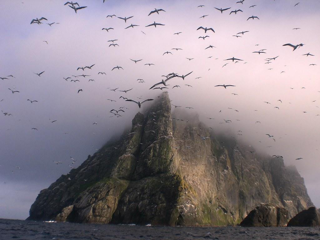 Gannets above Boreray, St Kilda