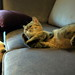 The Conversation : just between Dog & Cat