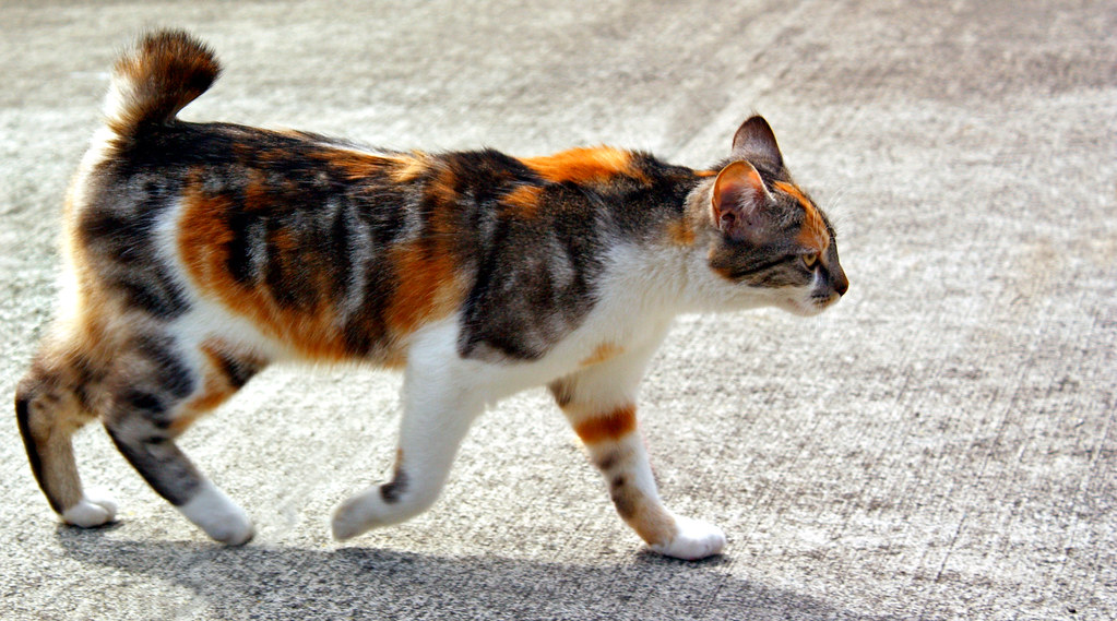 Dark Tortoiseshell Cat Names