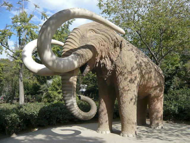 Photo for Elephant barcellona