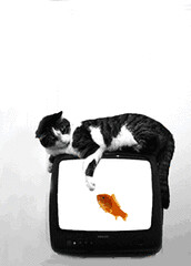 tv cat and goldfish | by alepouda