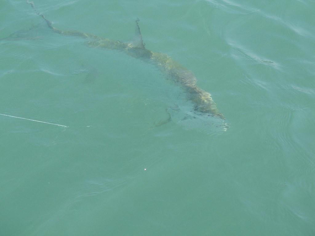 Deep Sea Fishing Daytona Beach Party Boat