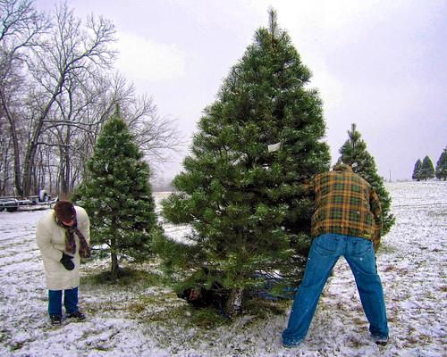 每到聖誕節德國人就會全家出動至聖誕樹賣場挑樹。(圖片來源:brent flanders)