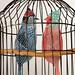 Caged lovebirds