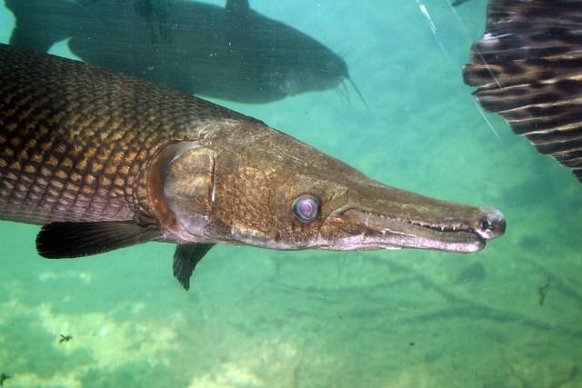 2008 07 25 athens tx freshwater fish hatchery 2981 for Fish hatchery texas