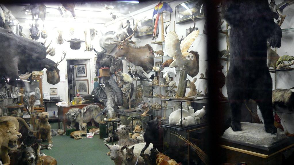 Taxidermist's window at night, Get Stuffed, Essex Road, Is ...