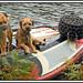 Sea dogs.