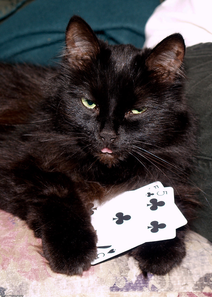 Cat Playing Cards Uk