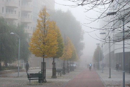 Misty morning | by KurtQ