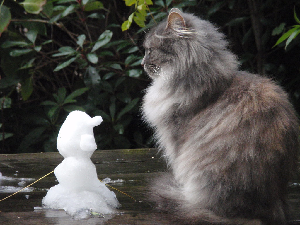 Snowman and Cat   Nikita regards Doon's handiwork on the fir ...