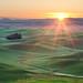 Palouse Sunrise Sunstar