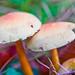 Magical Colourful Mushrooms