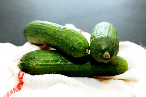 persian, seedless cucumbers | by sassyradish