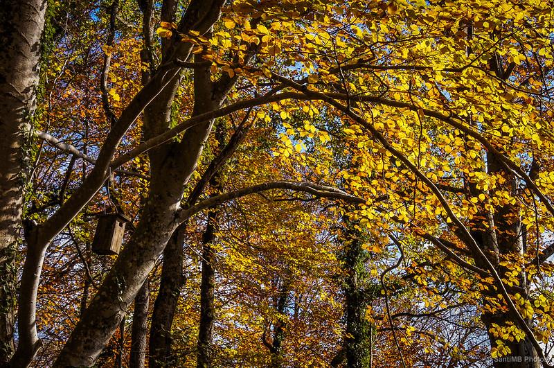 Cajas nido de madera en las hayas de la Grevolosa