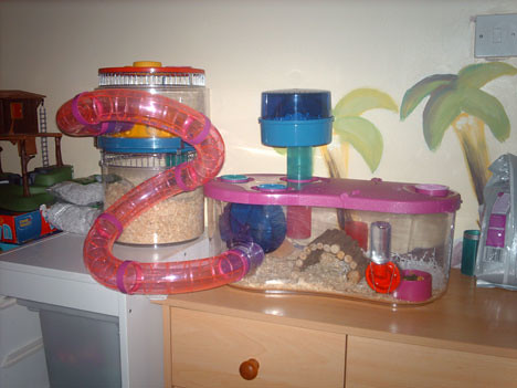 Fancy Bear Hamster Cages