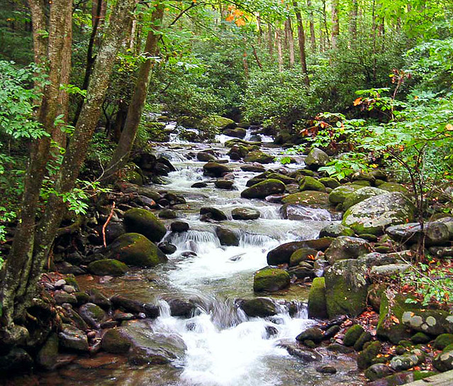 Roaring Fork Creek Gatlinburg Tn For A View With