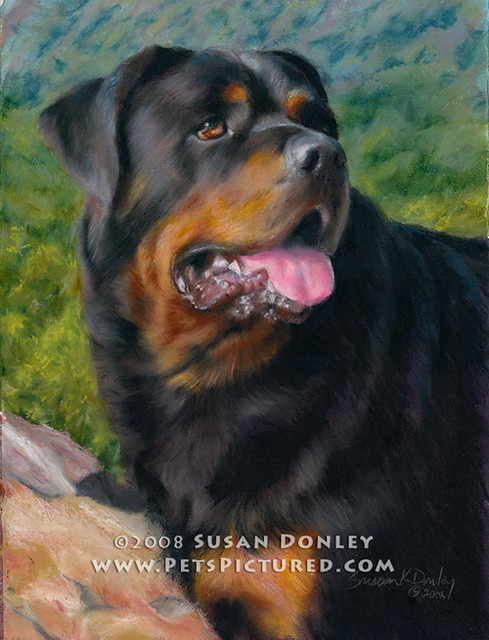 Memorial Portrait Of Jack Rottweiler 11x14 Oil Pastel
