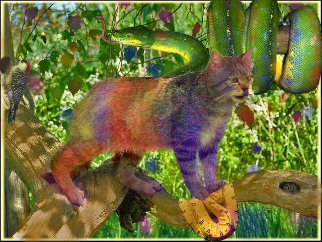 About >> The rare chameleon cat from the rainbow forest | My entry in… | Flickr