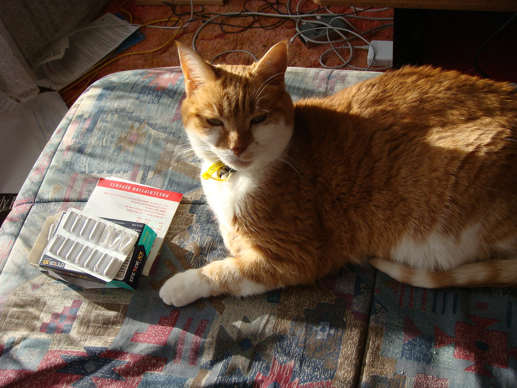 Medication For Cat Eye Infection