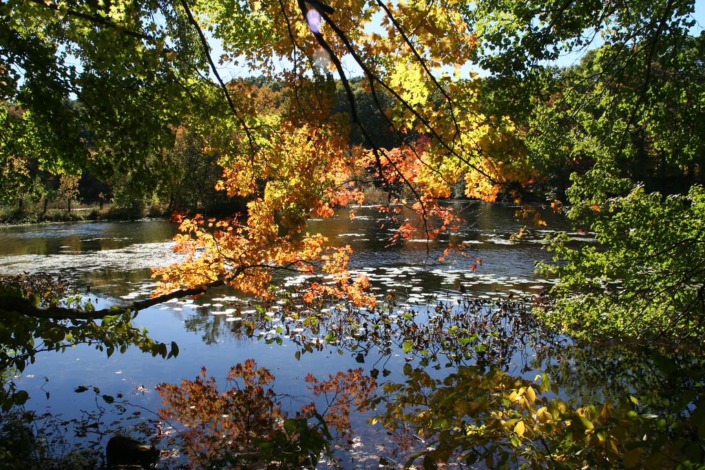 Autumn Scene At Supply Pond Autumn Trees Over Edge Of Supp Flickr