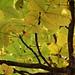 Photo Friday: Autumn