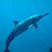 Dolphin Portraiture