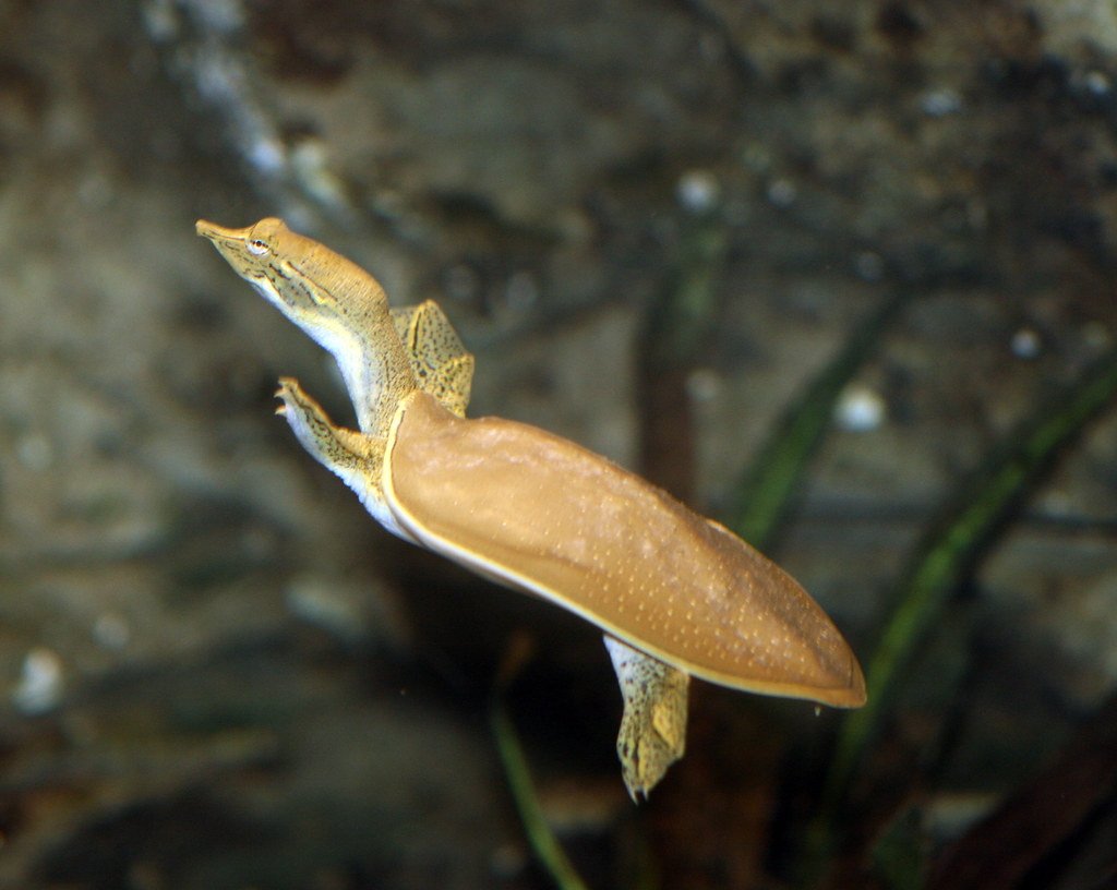 2008 07 25 athens tx freshwater fish hatchery 2930 for Fish hatchery texas