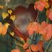 Heart of november